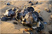 TG2142 : Stones on Beach, Cromer, Norfolk by Christine Matthews
