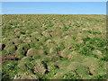 SM7309 : Heavily burrowed ground on Skomer by Gareth James