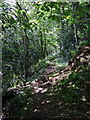 SN1642 : Footpath through woods by ceridwen