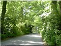 N9054 : Country Road, Co Meath by C O'Flanagan