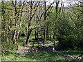 SN1641 : Crossing Afon Piliau by ceridwen