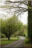 G8302 : Lough Key Forest Park by Liam Lysaght