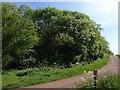 ST5346 : Lime Kiln Lane by Derek Harper