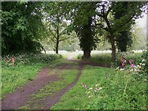 SU9948 : The North Downs Way through Shalford Park by Shazz