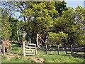 NO4205 : Largo Law woodland by Colin Kinnear