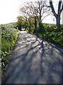 J4676 : Spring shadows by Ian Paterson