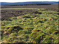 NY5690 : Moorland near Larriston, Liddesdale by Andrew Smith