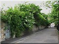NZ2364 : Access road beside Summerhill Recreation Ground by Mike Quinn