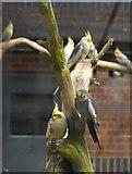 TA0729 : Cockatiels, West Park, Hull by Paul Harrop