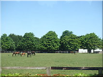 TL6061 : The National Stud, Newmarket by Richard Humphrey