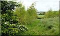 J4453 : Glasswater Wood near Crossgar (2007-2) by Albert Bridge