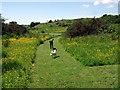 SM9530 : Buckette Fort gardens by ceridwen