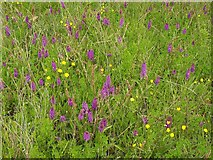 SX9066 : Orchids, Barton tip by Derek Harper
