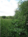 SU9778 : Overgrown footpath by don cload