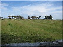 TA1181 : Ridge and furrow next to St Oswald's, Filey by John S Turner