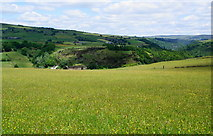 SD9524 : Wild flowers and a ruined barn above Calderdale by Bill Boaden