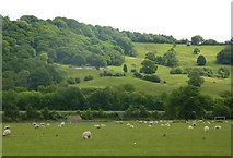 SK3057 : Countryside view near Cromford Bridge by Andrew Hill