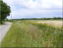TM3972 : Bridge Road to the A144 Bramfield Road & New Hedge by Adrian Cable