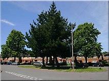SP2871 : Roseland Road, Kenilworth by David P Howard