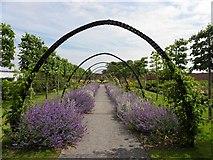 J5080 : Castle Park Walled Gardens by Kenneth  Allen