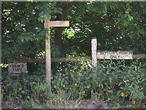 SU8518 : Signposts on the lane to Bepton church by Shazz