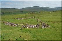 NG4162 : Remains of a fank near the Fairy Glen by John Allan