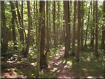 TQ4540 : Footpath in Tickners Wood by David Anstiss