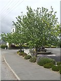 N0486 : Albert Reynold's Tree by John M