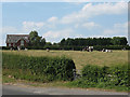SJ7366 : Cows in a field off Brereton Lane by Stephen Craven
