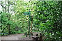TQ3870 : Green Chain Walk signpost, Beckenham Place Park by N Chadwick