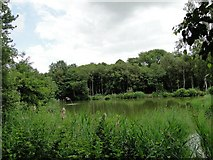 TM4392 : Fishing Lake  #2 by Adrian S Pye