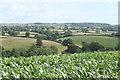 ST6064 : 2010 : Field of maize near Belluton by Maurice Pullin