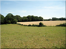 TQ4357 : Fields of Buckhurst Road by Oast House Archive