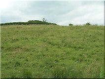 SE8565 : Grazing land, Wharram Grange by JThomas