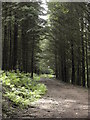 SS8585 : Forest Track in Craig yr Aber by John Finch