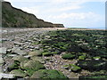 TR2269 : Cliffs and foreshore near Reculver by E Gammie
