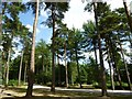 SP8808 : Wendover Woods (picnic area) by Keith Salvesen