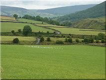 SK1679 : Gulls in a field near Intake Dale by Peter Barr