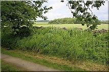 SK1661 : Fields Near Friden by Mick Garratt