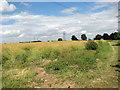 TF8412 : Oilseed rape crop east of Newton Road by Evelyn Simak