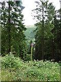 SH8112 : View through forest by liz dawson