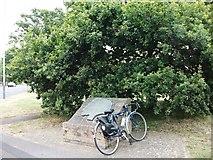 SP3266 : The Midland Oak, Lillington Road by John Brightley