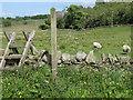 NY6858 : Public footpath towards Beaconhill Plantation by Mike Quinn