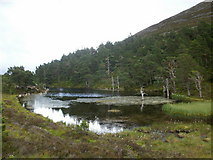 NH9506 : Lochan near to Rothiemurchus Lodge by Peter S