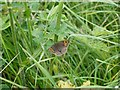 SD4777 : Butterfly on Silverdale Moss by Gary Rogers