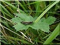 SD4777 : Cricket on Silverdale Moss by Gary Rogers