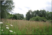 TG1807 : Wooded marsh on the edge of UEA by N Chadwick