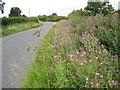 SP0947 : Roadside wildflowers, Littleton by Philip Halling