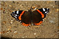 SZ5781 : Red Admiral at Shanklin by Peter Trimming