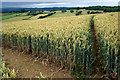 SO5895 : View over wheat field by David Lally
